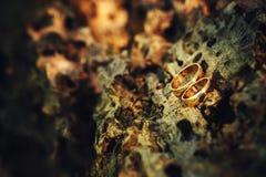 Обручальные кольца золота на старой древесине в теплых цветах Стоковые Изображения RF