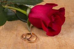 Обручальные кольца и подняли Стоковые Изображения