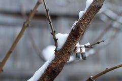 Обручальные кольца на ветви дерева Стоковое Изображение RF
