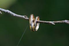 Обручальные кольца на ветви с сетью Стоковая Фотография