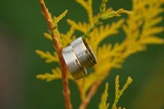 Обручальные кольца на ветви Стоковые Изображения RF