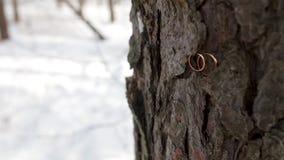 Обручальные кольца помещенные на коре дерева Соедините обручальные кольца на старой деревянной текстуре, расшиву дерева Обручальн акции видеоматериалы