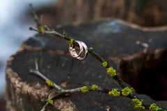 2 обручального кольца на ветви Стоковая Фотография
