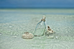 2 обручального кольца на камне коралла Стоковое фото RF