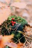 3 обручального кольца на старом пне с незрелыми ежевиками в лесе осени Стоковое фото RF
