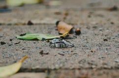 3 обручального кольца Стоковые Фотографии RF