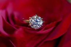 Обручальное кольцо диаманта в красной розе Стоковое Изображение RF