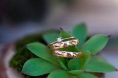 Обручальное кольцо кладя на succulent Красивые обручальные кольца золота с диамантами Стоковое Изображение RF