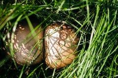 Обручальное кольцо на грибах стоковые изображения