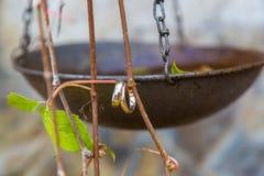 Обручальные кольца вися на ветви виноградин Стоковые Фотографии RF