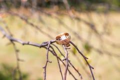 Обручальные кольца вися на ветви Стоковые Изображения