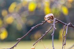 Обручальные кольца вися на ветви Стоковое Фото