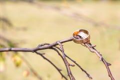 Обручальные кольца вися на ветви Стоковая Фотография