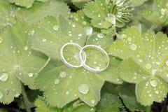 Обручальные кольца в белом золоте на зеленых лист Стоковая Фотография RF