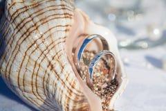 Обручальные кольца в seashells для морской церемонии стоковое изображение