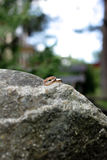 Обручальные кольца лежат на большой каменной лужайке Стоковая Фотография