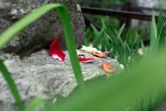Обручальные кольца лежат на большой каменной лужайке Стоковые Изображения
