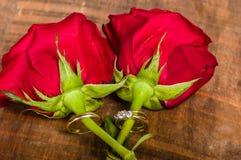 Обручальные кольца золота на красных розах Стоковые Фотографии RF