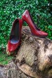 Обручальные кольца и ботинки женщин на пне Стоковые Изображения