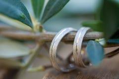 Обручальные кольца на ветви оливкового дерева Стоковые Фото