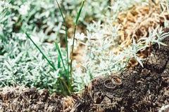 Обручальные кольца на дереве Стоковые Фотографии RF