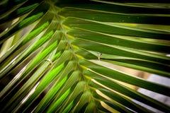 Обручальные кольца на листьях ладони Стоковая Фотография