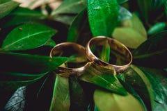Обручальные кольца на листья Стоковые Фотографии RF