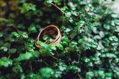 Обручальные кольца на листья Стоковые Изображения