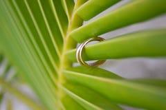 Обручальные кольца на лист ладони стоковое изображение rf