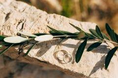 Обручальные кольца на камне и оливковой ветке Стоковое фото RF