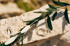 Обручальные кольца на камне и оливковой ветке Стоковые Фото