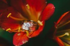 Обручальные кольца на красном цветке Стоковое Изображение