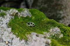 Обручальные кольца на мхе Стоковые Изображения