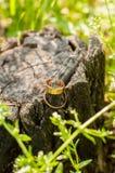 Обручальные кольца на пне дерева Стоковые Фотографии RF