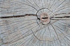 Обручальные кольца на пне Стоковые Фото