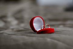 Обручальные кольца на пне Стоковые Изображения RF