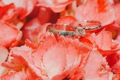 Обручальные кольца на розовых листьях Стоковые Изображения