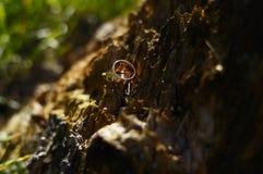 Обручальные кольца с красным золотом Стоковое фото RF