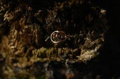 Обручальные кольца с красным золотом Стоковая Фотография RF