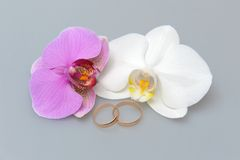 Обручальные кольца с цветками орхидеи на сером цвете Стоковая Фотография