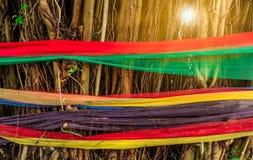 Обруч ткани 5 цветов вокруг дерева с светом пирофакела Верование тайских людей Пути защитить окружающую среду стоковое фото