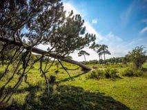 Обрушенное дерево Стоковое Фото