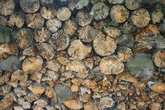 Обрушенные и сложенные деревья Стоковые Изображения RF