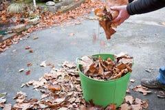 Обслуживание сада собирая листья осени Стоковая Фотография RF