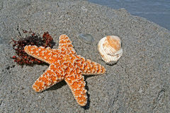 обстреливает starfish Стоковое фото RF