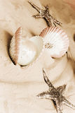 обстреливает starfishes Стоковая Фотография RF