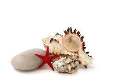 Обстреливает морские звёзды на белой предпосылке стоковое фото rf