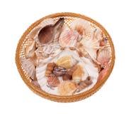 Обстреливает seashells Стоковые Фото