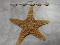 обстреливает starfish Стоковая Фотография RF