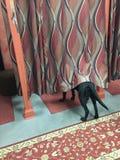 Обслуживайте собаку в уборной Стоковое Изображение